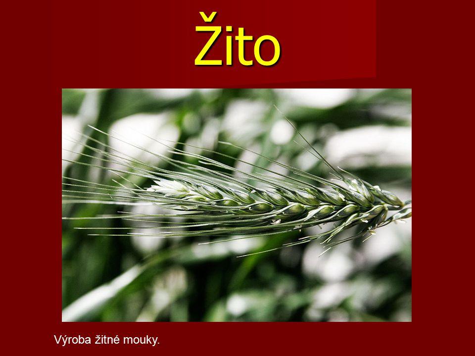 Žito Výroba žitné mouky.