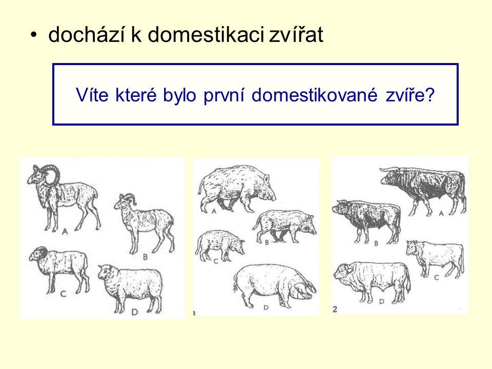 Víte které bylo první domestikované zvíře