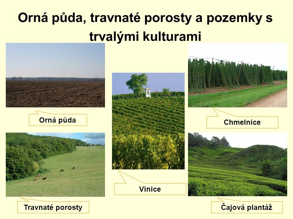 Orná půda, travnaté porosty a pozemky s trvalými kulturami