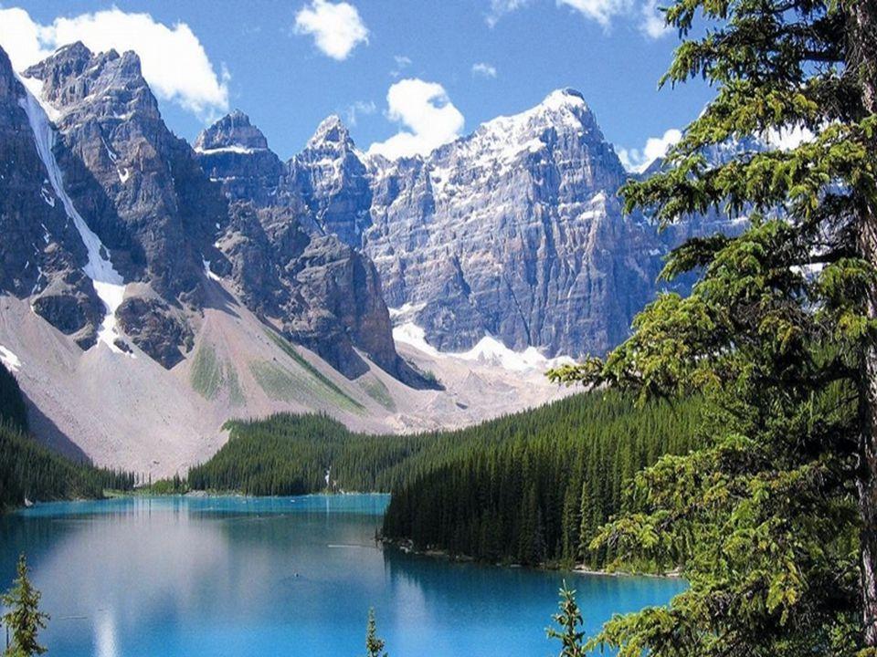 Povrch : Východní část Kanady tvoří nížiny(Arktická) ale i vysočiny(Laurentinská).(Tajga, lesy listnaté, jehličnaté a smíšené, tundry, lesotundry).