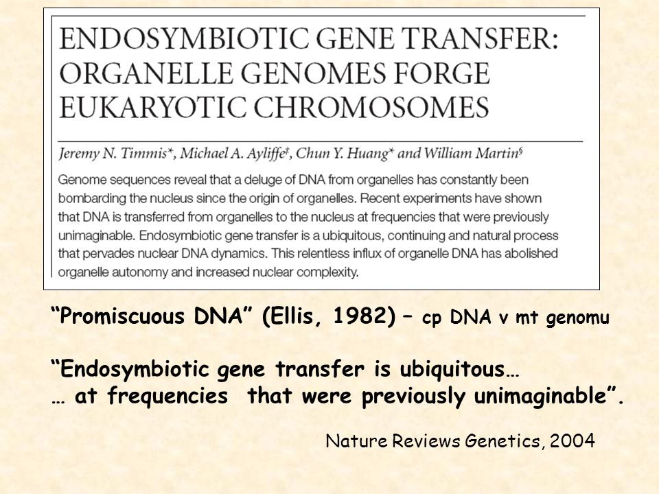 Promiscuous DNA (Ellis, 1982) – cp DNA v mt genomu