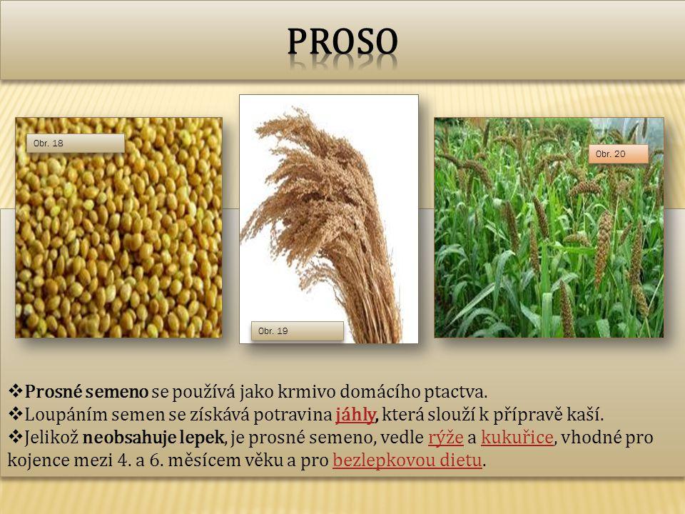 Proso Prosné semeno se používá jako krmivo domácího ptactva.