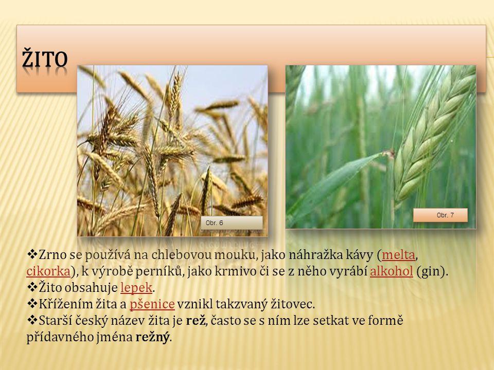 Žito Zrno se používá na chlebovou mouku, jako náhražka kávy (melta, cikorka), k výrobě perníků, jako krmivo či se z něho vyrábí alkohol (gin).