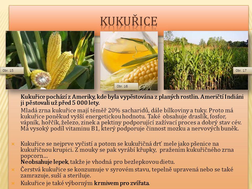 kukuřice . Kukuřice pochází z Ameriky, kde byla vypěstována z planých rostlin. Američtí Indiáni ji pěstovali už před 5 000 lety.