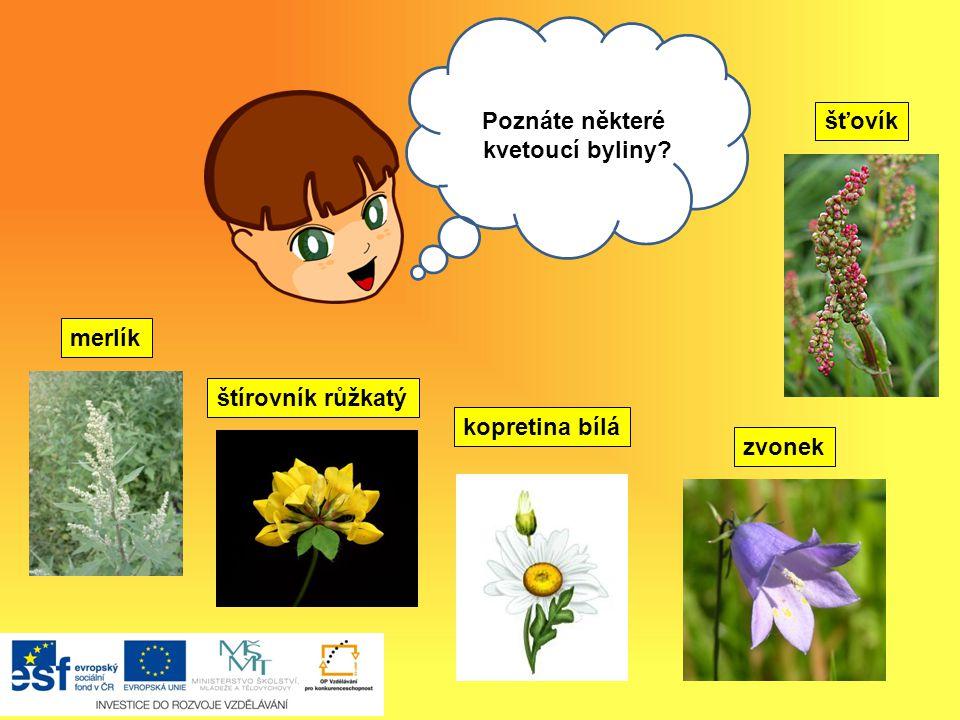 Poznáte některé kvetoucí byliny