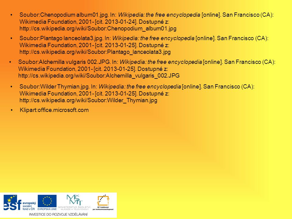 Soubor:Chenopodium album01. jpg