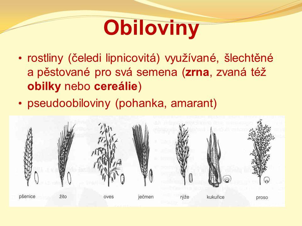 Obiloviny rostliny (čeledi lipnicovitá) využívané, šlechtěné a pěstované pro svá semena (zrna, zvaná též obilky nebo cereálie)