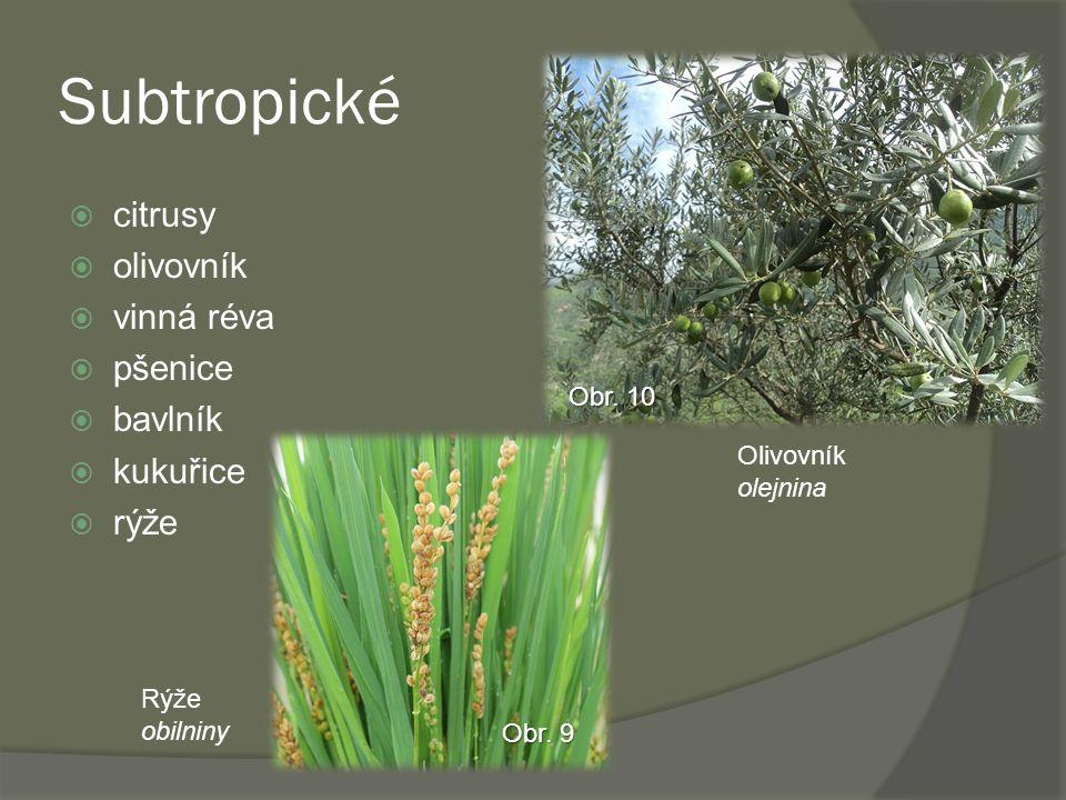 Subtropické citrusy olivovník vinná réva pšenice bavlník kukuřice rýže