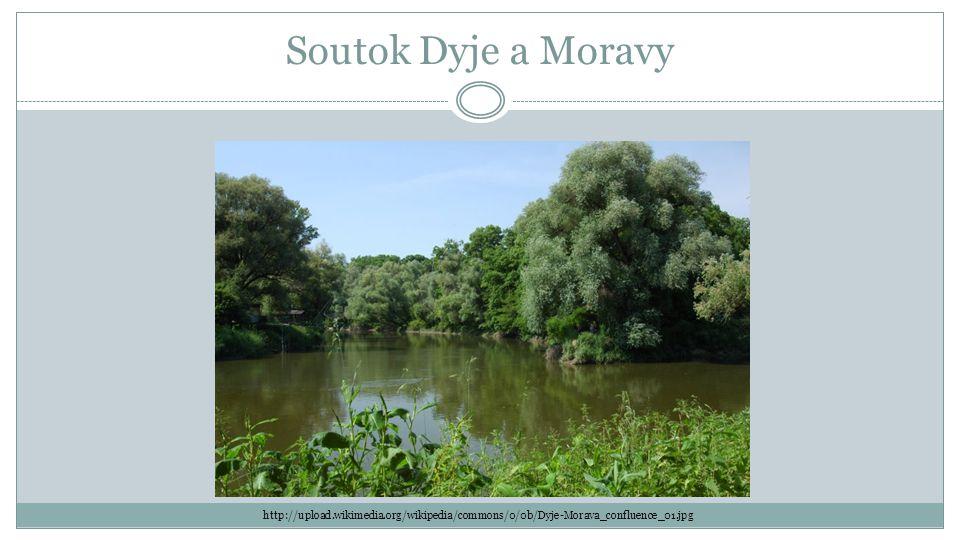Soutok Dyje a Moravy http://upload.wikimedia.org/wikipedia/commons/0/0b/Dyje-Morava_confluence_01.jpg.