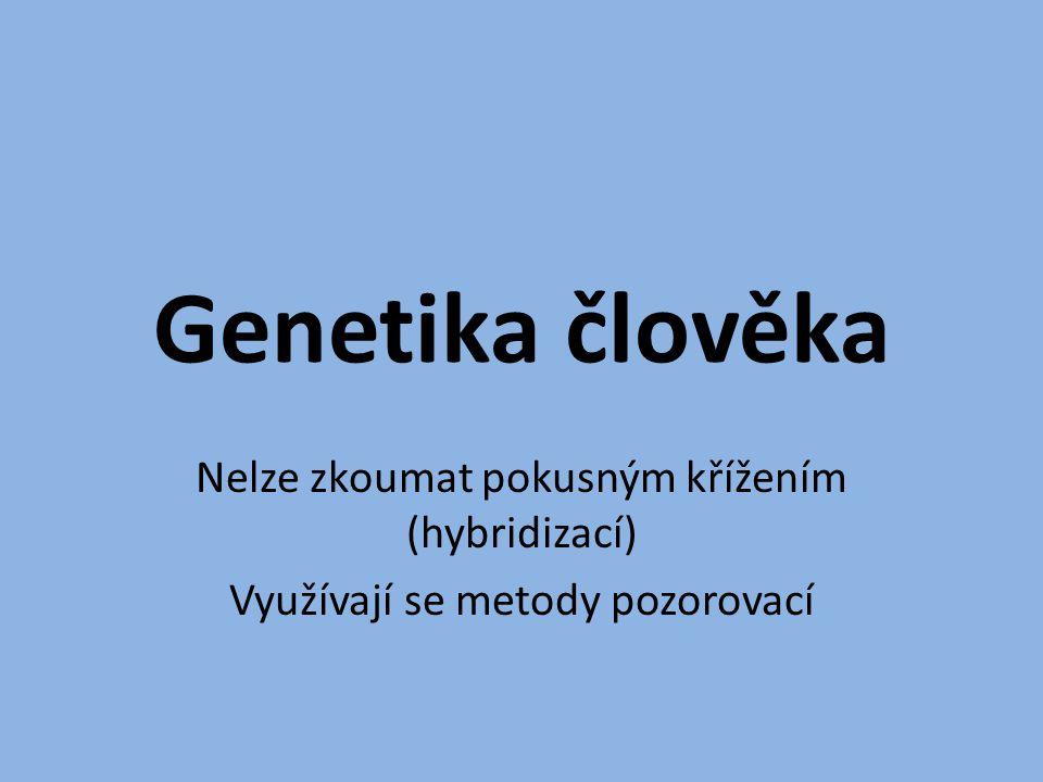 Genetika člověka Nelze zkoumat pokusným křížením (hybridizací)