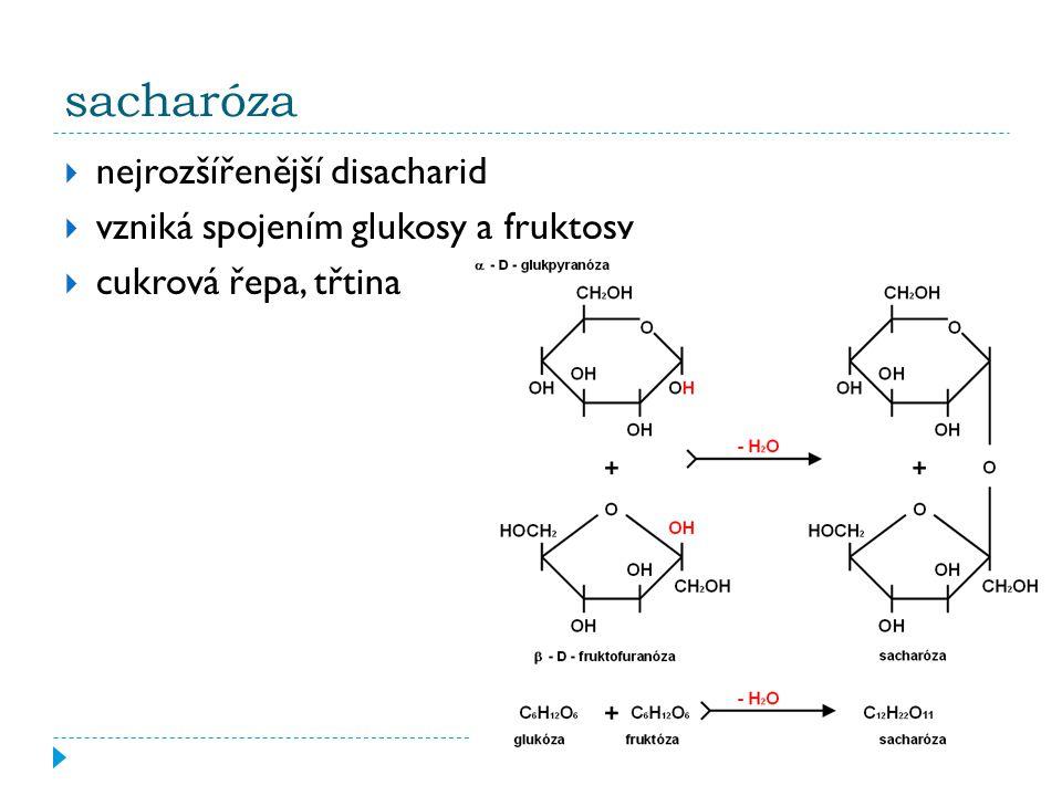 sacharóza nejrozšířenější disacharid