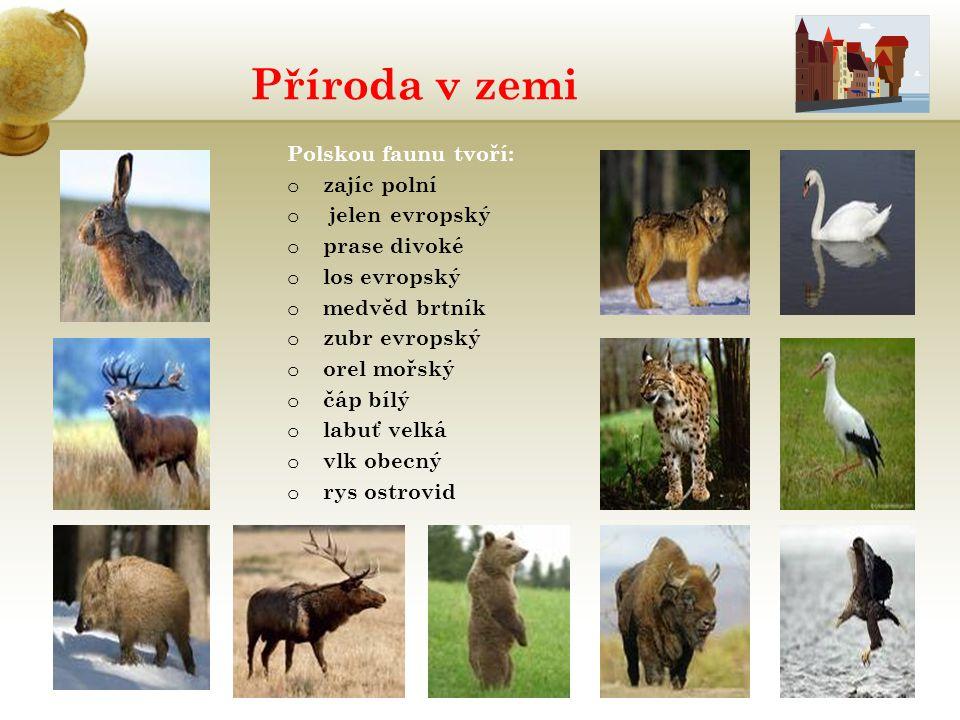 Příroda v zemi Vložte obrázek rostliny nebo zvířete žijícího v zemi.