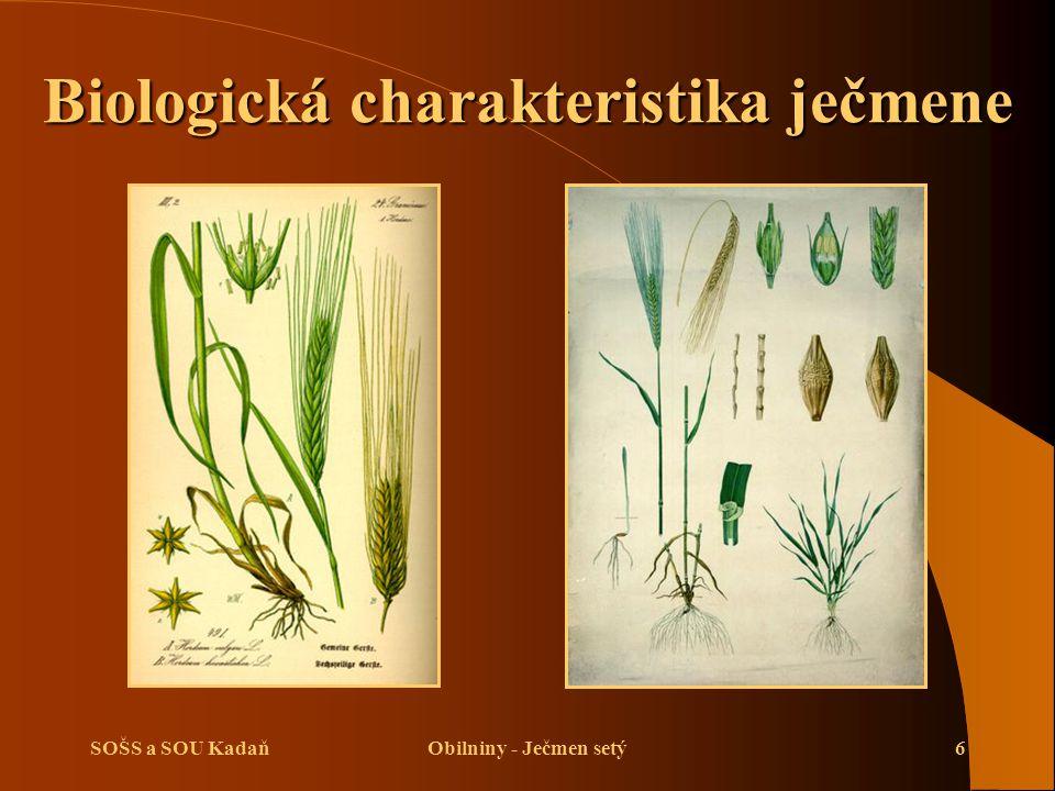 Biologická charakteristika ječmene