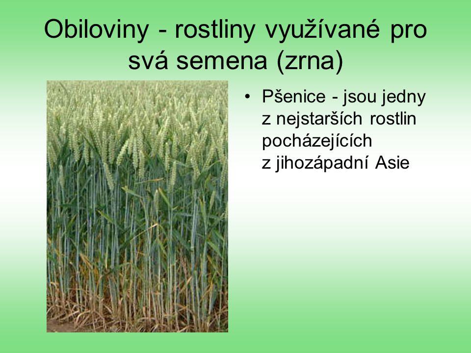 Obiloviny - rostliny využívané pro svá semena (zrna)