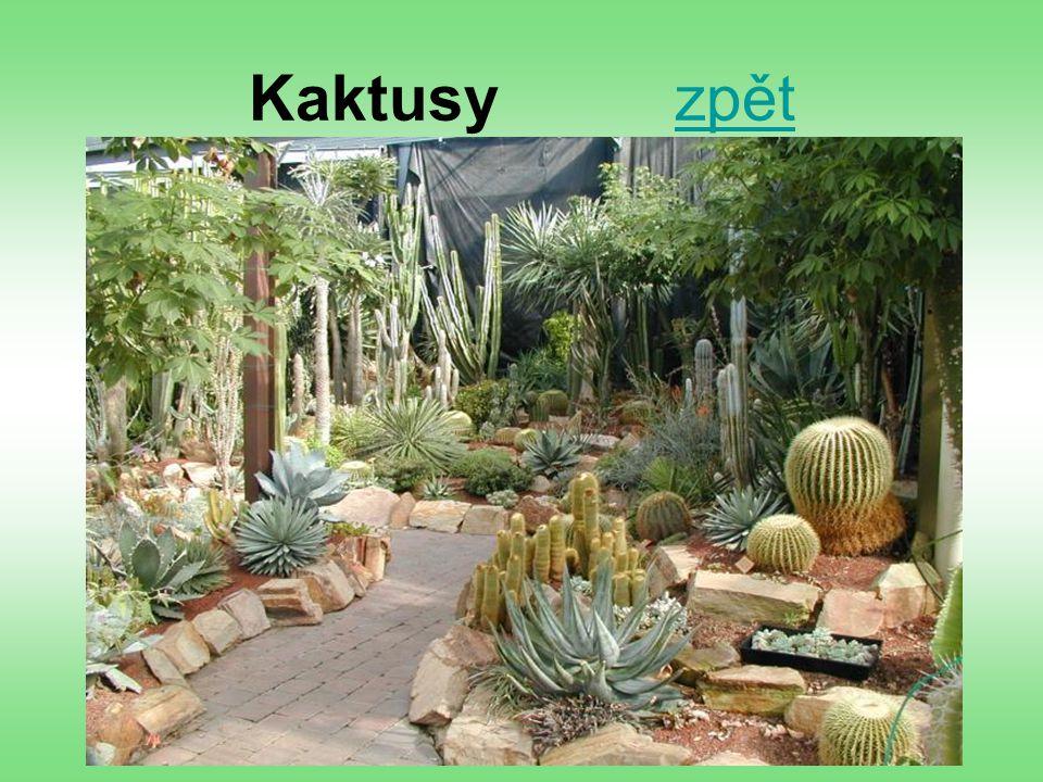 Kaktusy zpět