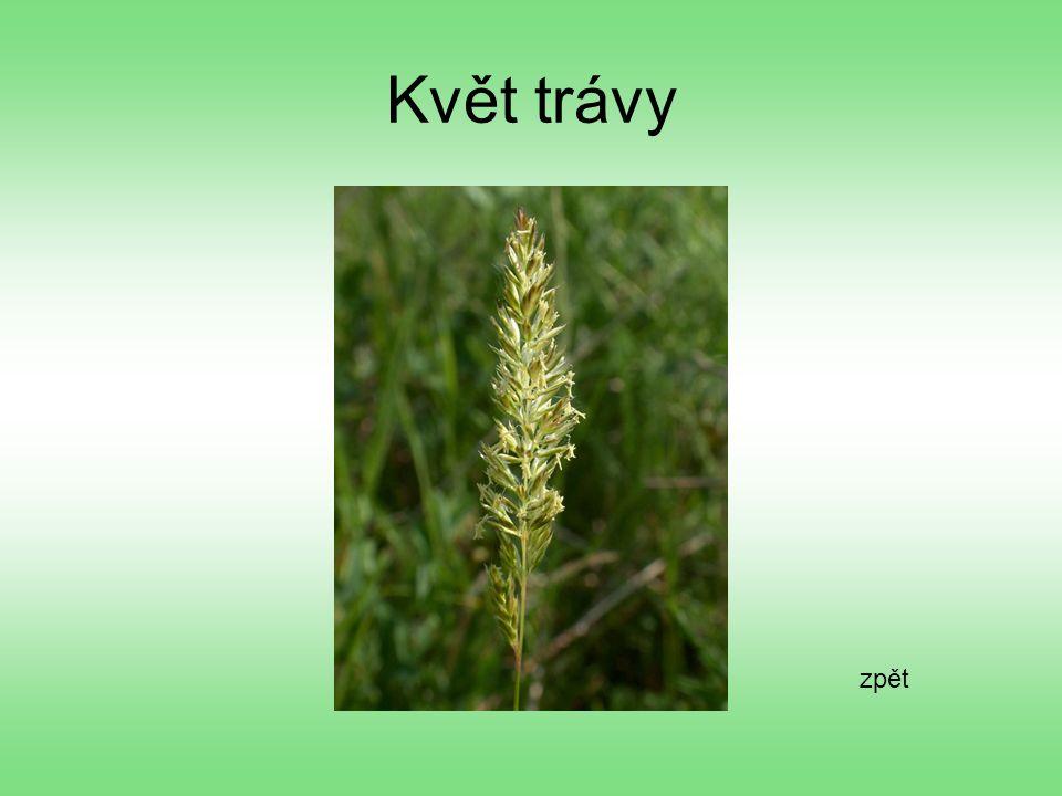 Květ trávy zpět