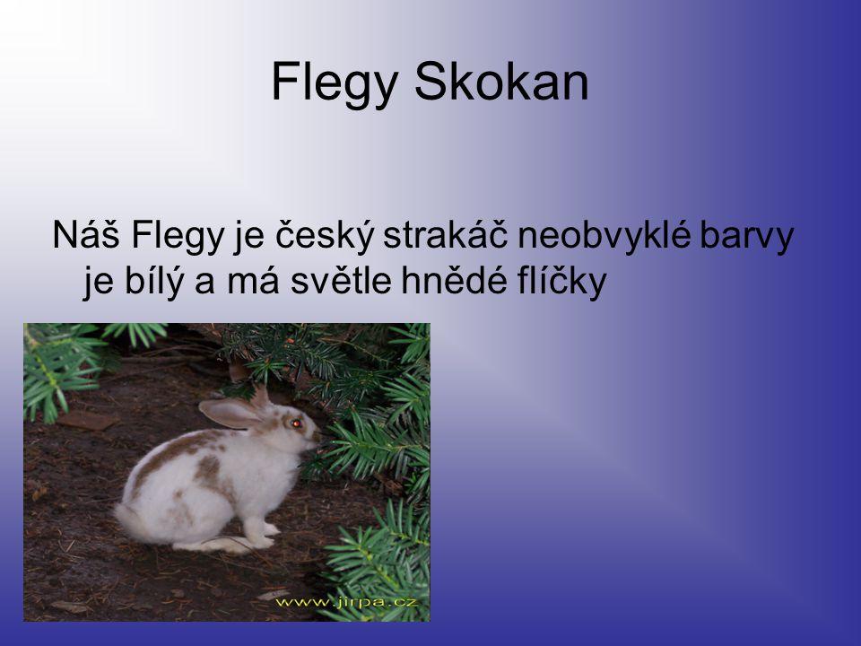 Flegy Skokan Náš Flegy je český strakáč neobvyklé barvy je bílý a má světle hnědé flíčky