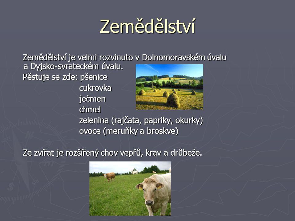 Zemědělství Zemědělství je velmi rozvinuto v Dolnomoravském úvalu a Dyjsko-svrateckém úvalu. Pěstuje se zde: pšenice.