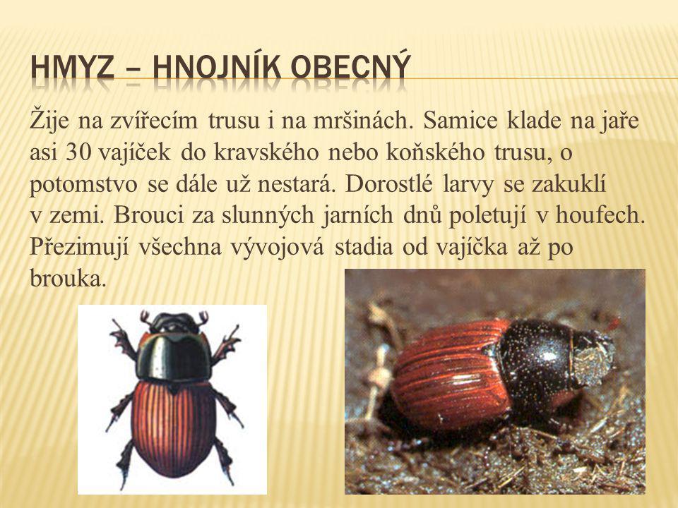 Hmyz – hnojník obecný