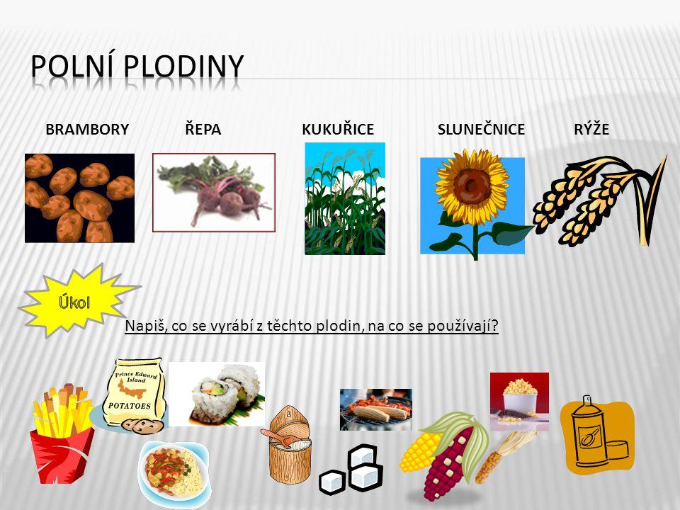 Polní plodiny BRAMBORY ŘEPA KUKUŘICE SLUNEČNICE RÝŽE Napiš, co se vyrábí z těchto plodin, na co se používají