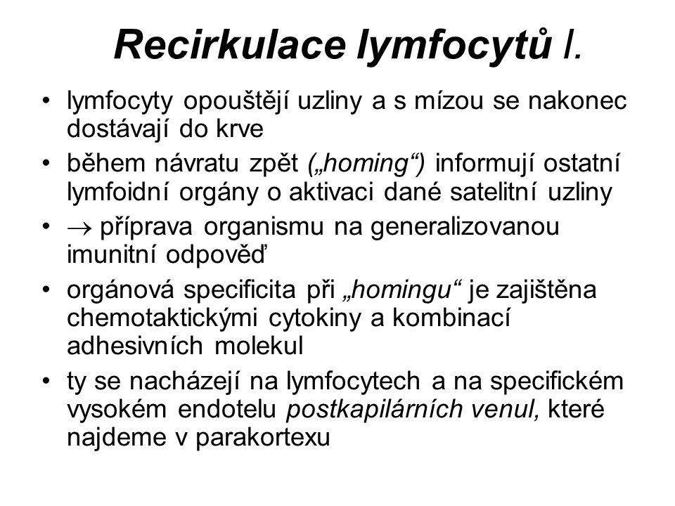 Recirkulace lymfocytů I.