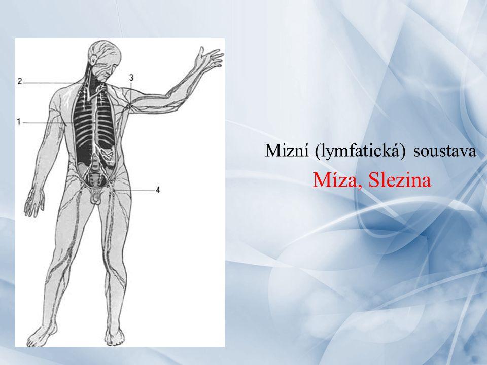 Mizní (lymfatická) soustava