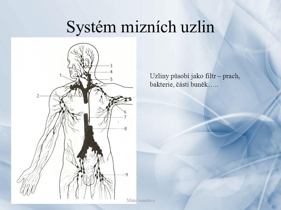 Systém mizních uzlin Uzliny působí jako filtr – prach, bakterie, části buněk….. Mízní soustava