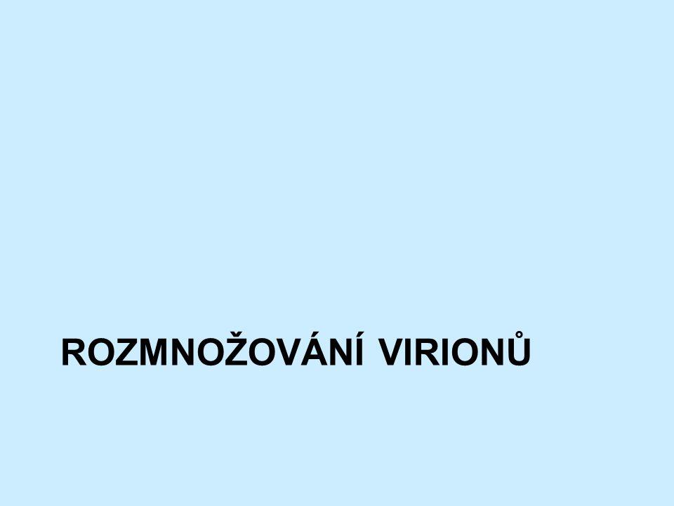 Rozmnožování virionů