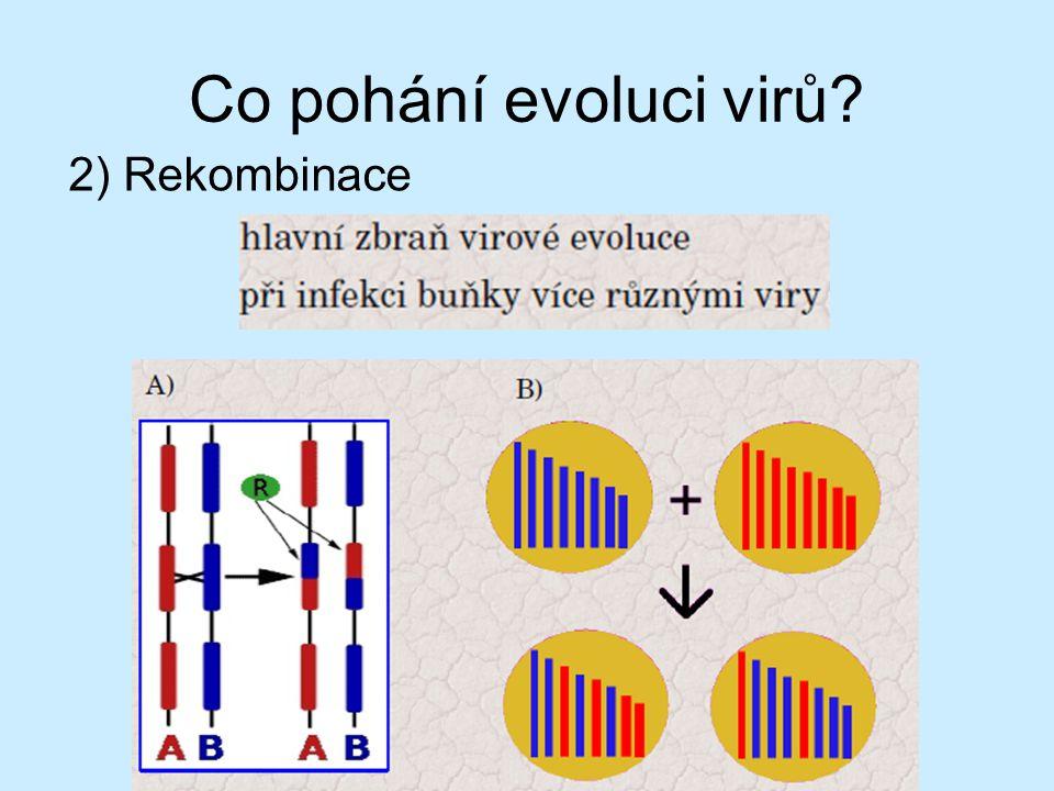 Co pohání evoluci virů 2) Rekombinace Virus chřipky má 8 úseků RNA