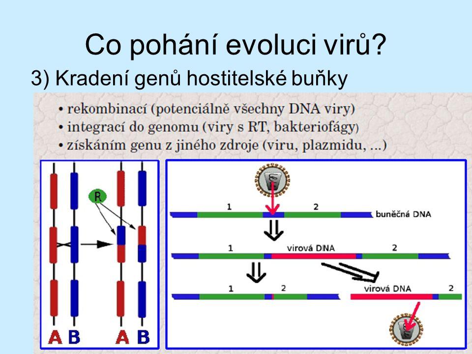 Co pohání evoluci virů 3) Kradení genů hostitelské buňky