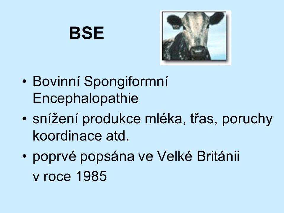 BSE Bovinní Spongiformní Encephalopathie