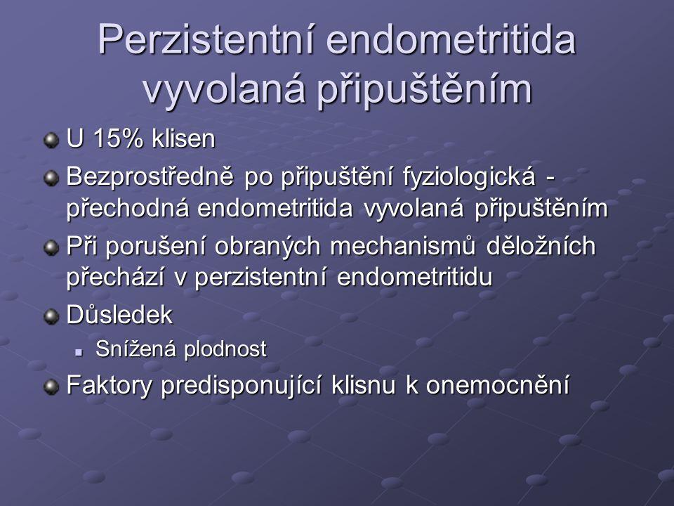 Perzistentní endometritida vyvolaná připuštěním