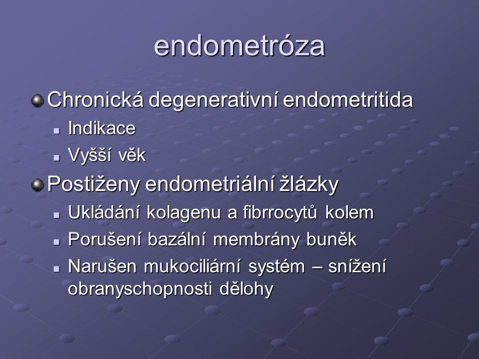 endometróza Chronická degenerativní endometritida
