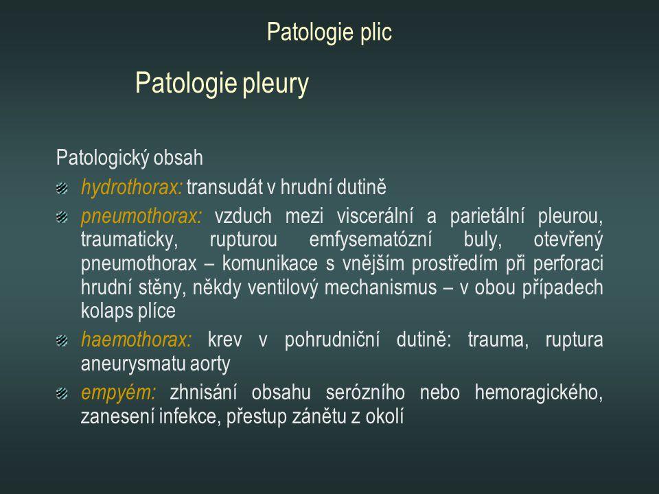Patologie pleury Patologie plic Patologický obsah
