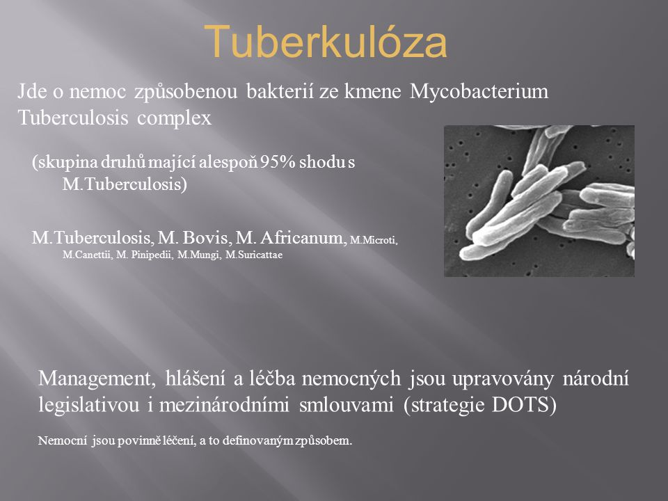 Tuberkulóza Jde o nemoc způsobenou bakterií ze kmene Mycobacterium Tuberculosis complex.