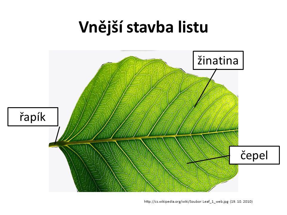 Vnější stavba listu žinatina řapík čepel