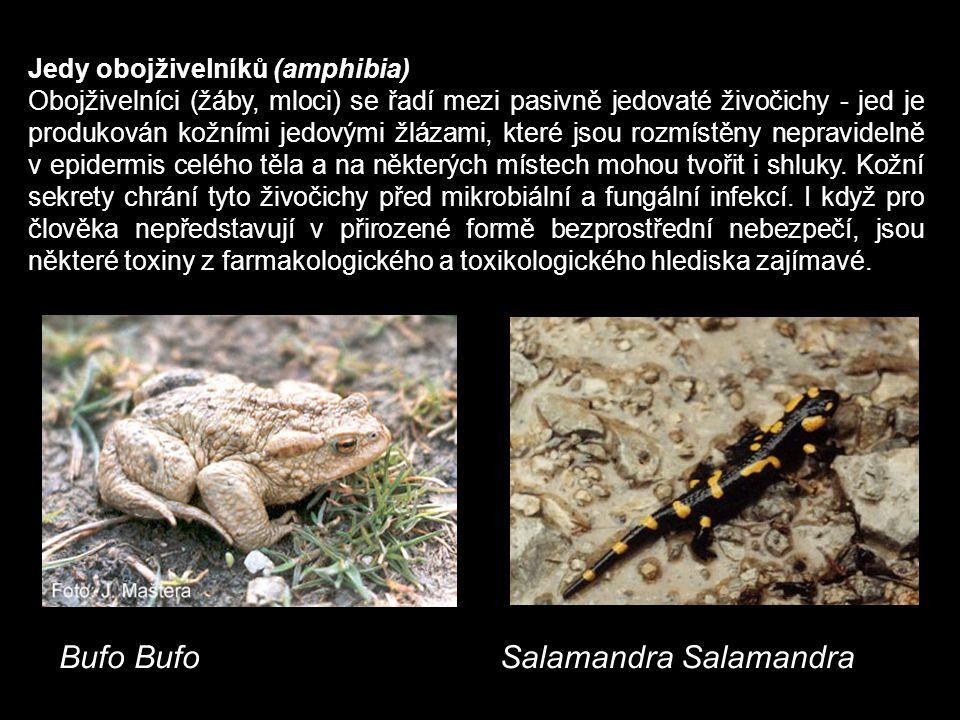 Bufo Bufo Salamandra Salamandra