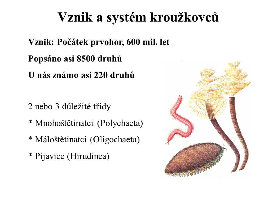 Vznik a systém kroužkovců