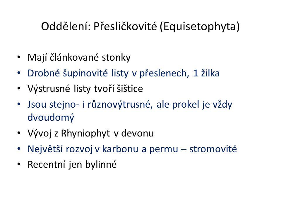 Oddělení: Přesličkovité (Equisetophyta)