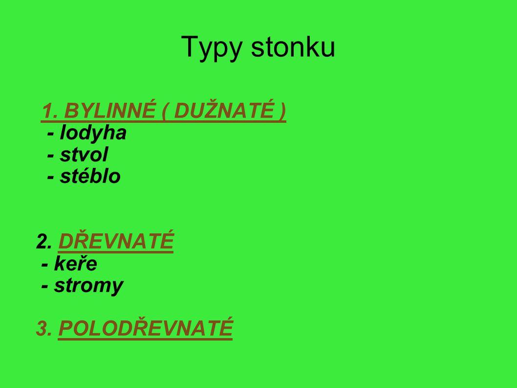 Typy stonku 1. BYLINNÉ ( DUŽNATÉ ) - lodyha - stvol - stéblo