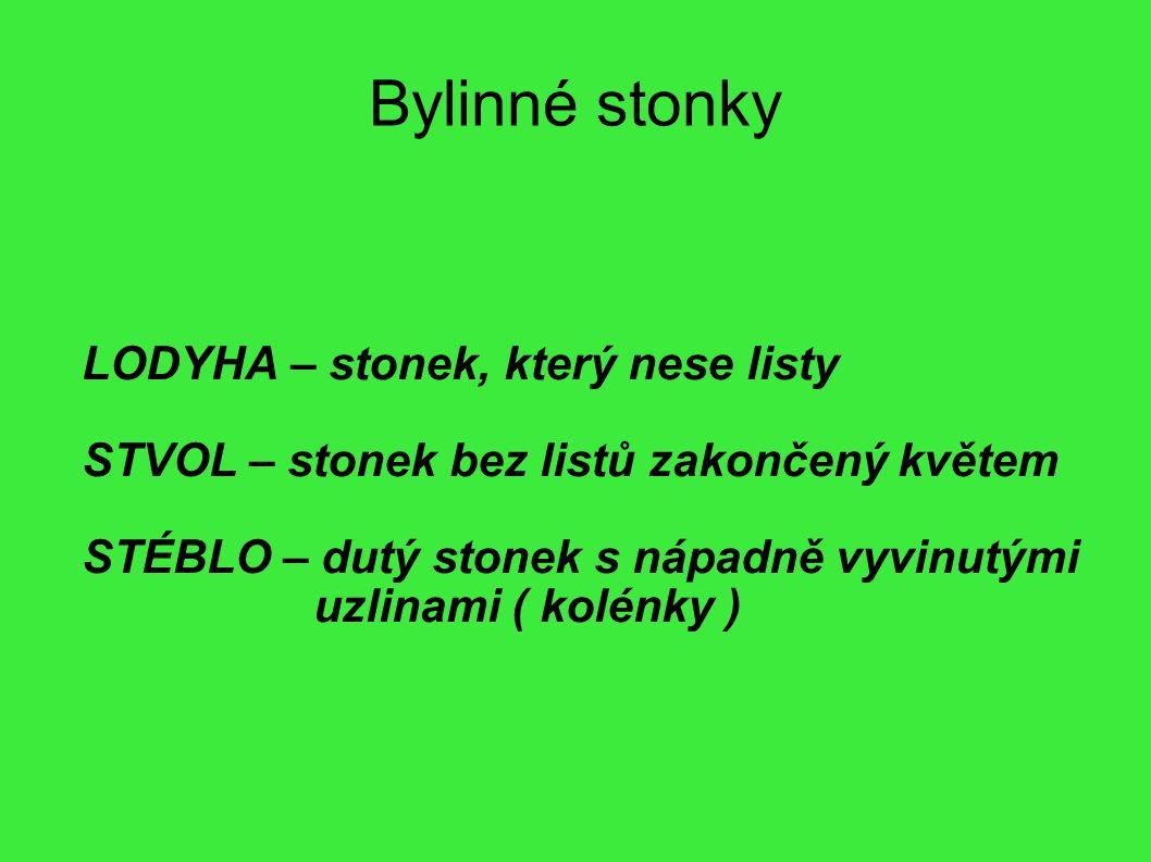 Bylinné stonky LODYHA – stonek, který nese listy