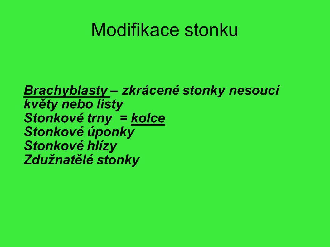 Modifikace stonku Brachyblasty – zkrácené stonky nesoucí květy nebo listy. Stonkové trny = kolce.