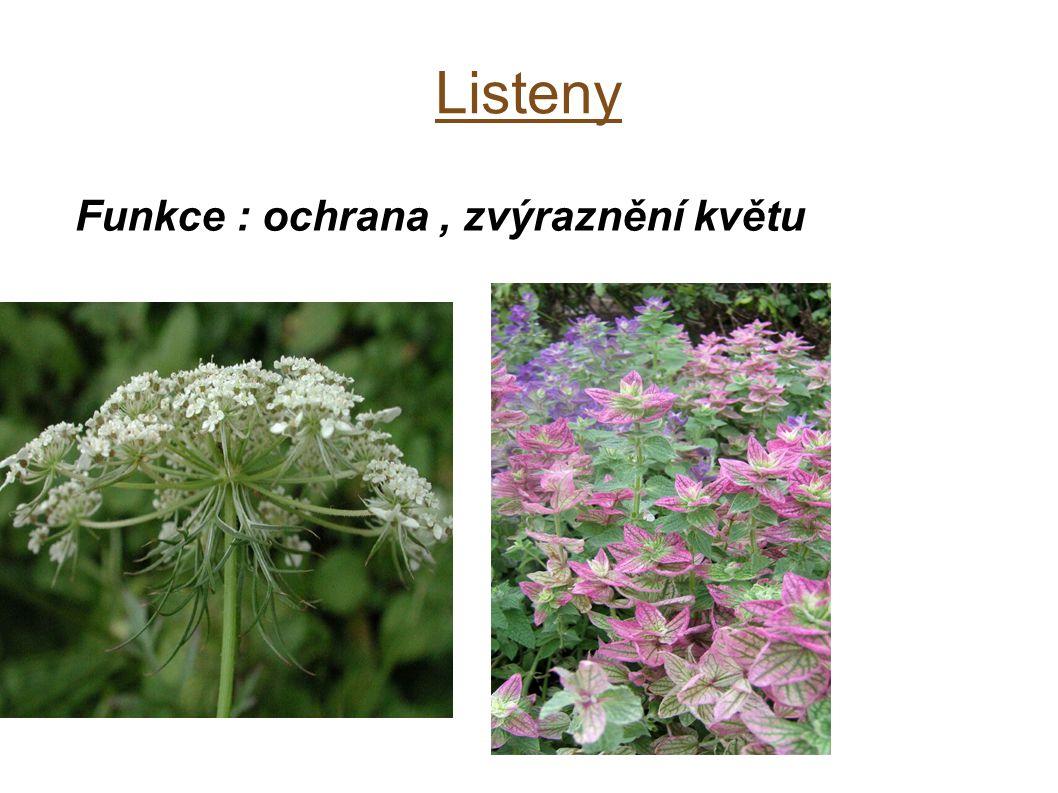 Funkce : ochrana , zvýraznění květu