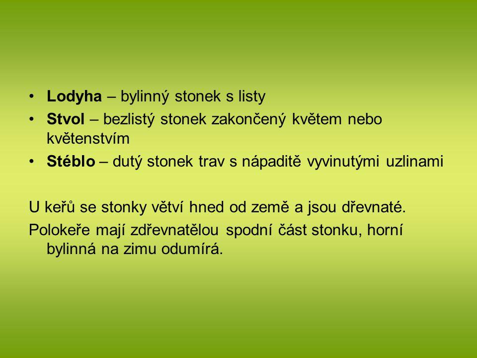 Lodyha – bylinný stonek s listy