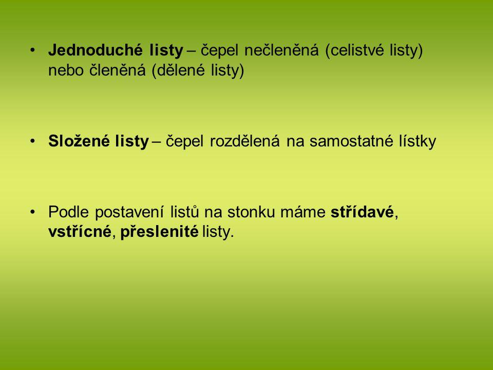 Jednoduché listy – čepel nečleněná (celistvé listy) nebo členěná (dělené listy)