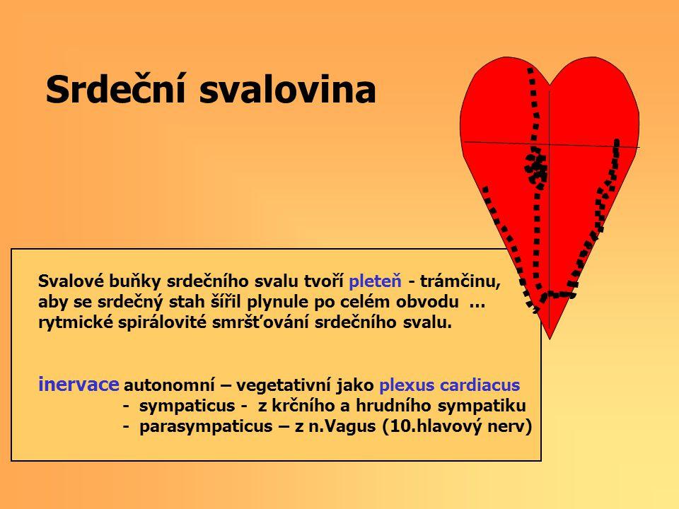 Srdeční svalovina Svalové buňky srdečního svalu tvoří pleteň - trámčinu, aby se srdečný stah šířil plynule po celém obvodu …