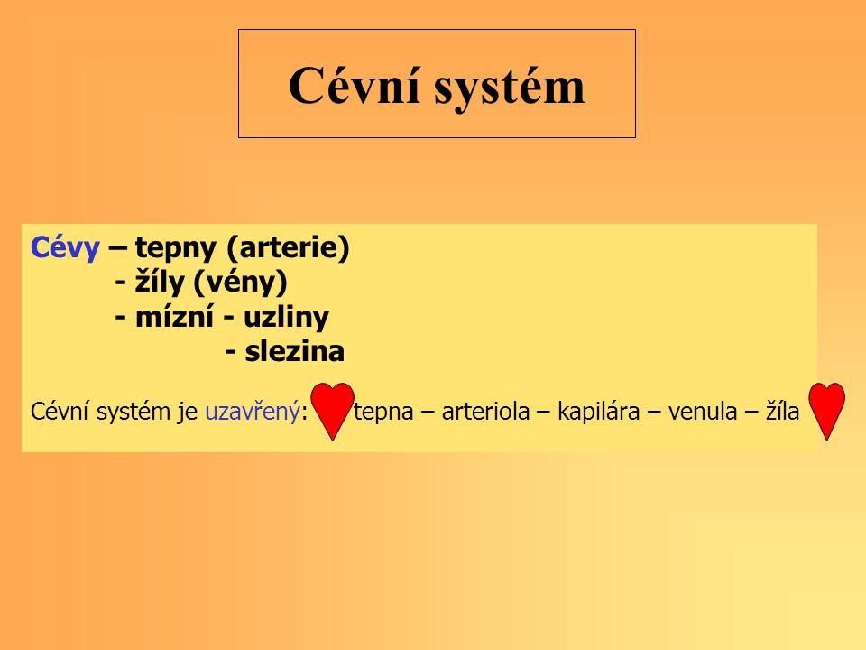 Cévní systém Cévy – tepny (arterie) - žíly (vény) - mízní - uzliny