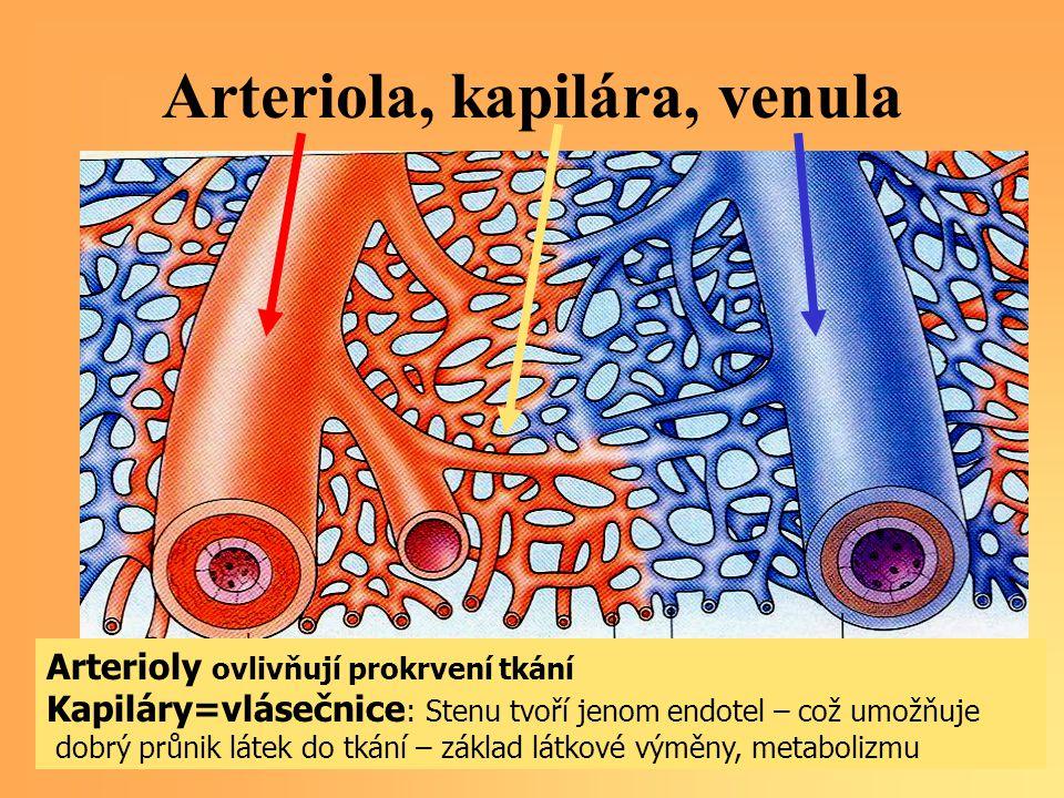 Arteriola, kapilára, venula