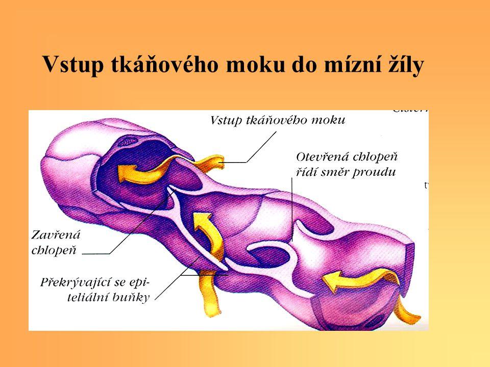 Vstup tkáňového moku do mízní žíly