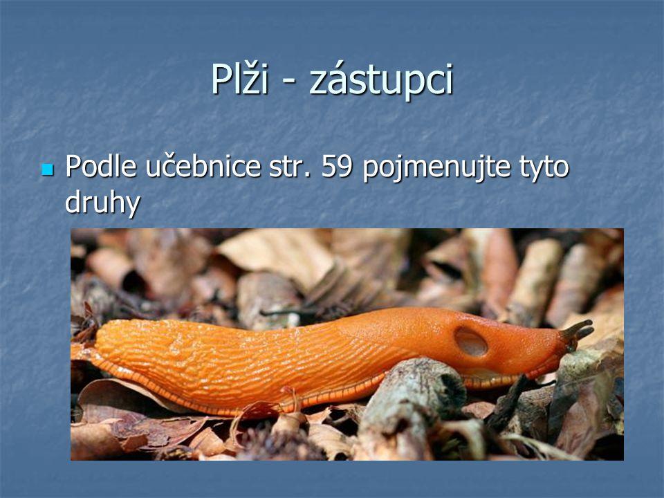 Plži - zástupci Podle učebnice str. 59 pojmenujte tyto druhy